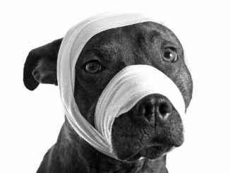 """""""Reus"""" šuo sudaužė varpą žmogui, kuris jo sumušė"""
