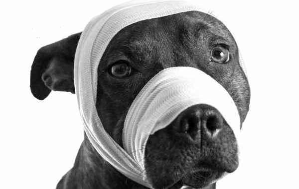 In Reus un cane làcrime u pene per un omu chì era battava